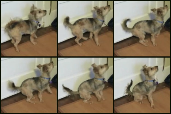 Pictures of a dog sitting in slow motion